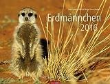 Erdmännchen - Kalender 2016 - Weingarten-Verlag - Marie-Luce Hubert und Jean-Louis Klein - Wandkalender - 45 cm x 34,5 cm