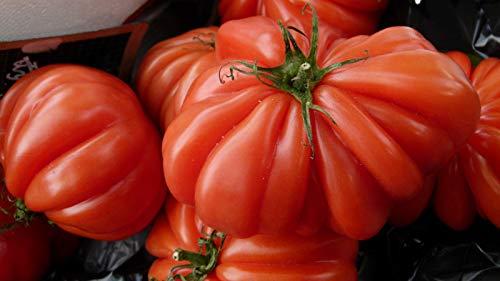 Tomate 10 Samen