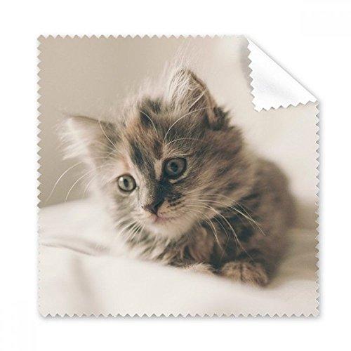 Animal Kitty Gray Cat Foto Brille Reinigungstuch Reinigungstuch Handy-Display von 5x Geschenk