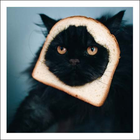 For When I Get Peckish... Cattitude Greeting Card Blank Inside Any Occasion (Purrfect Cat Food)