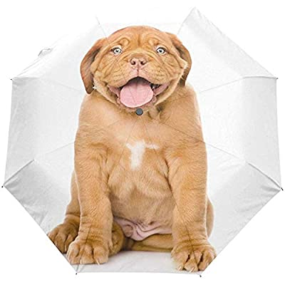 Lindo Cachorro Perro Animal Auto Cerrar Sol Paraguas Lluvia