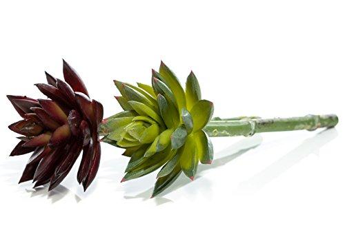 Nautisches Crush Trading Künstliche Sukkulenten | Kohl echeverien Picks Faux Succulents | 2Farben (Burgund und Grün w/Pink Tipps) TM