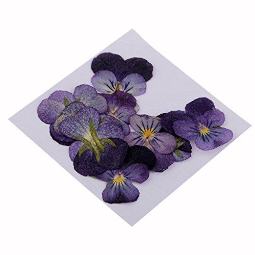 MagiDeal 10er Set Echte Getrocknete Blumen Blätter Gepresste Blüten Künstliche Blumen für Blumenkunst Handwerk Kartenherstellung Scrapbooking - Farbe 9