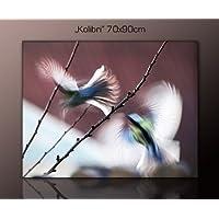 XXL Wandbild Vogel Auf Echter Leinwand (kolibri 70x90cm) Zauberhafte  Nahaufnahme Bilder Fertig Gerahmt Mit