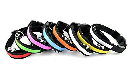 LED Halsband Leuchthalsband S/M/L/XL Hundehalsband Sicherheitshalsband Nylon Da.Wa - 3