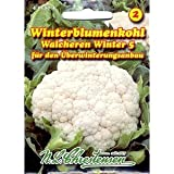 Blumenkohl Walcheren Winter 5 (Portion)