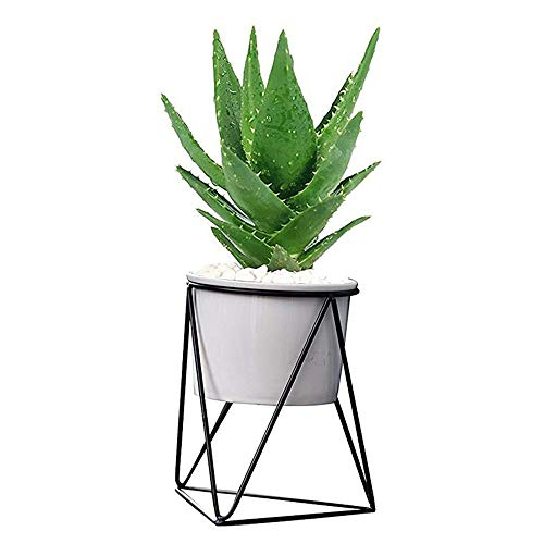 GZQ Pflanzenhalter Vase Blumen Pflanzgefäß Sukkulenten Kaktusbehälter Keramik Runde Schale mit Metallständer für Zuhause, Café, Shop, Zimmer, Tisch, Party, Hochzeit, Dekoration White Pot+Black Shelf (White-parties And Dekorationen Black)