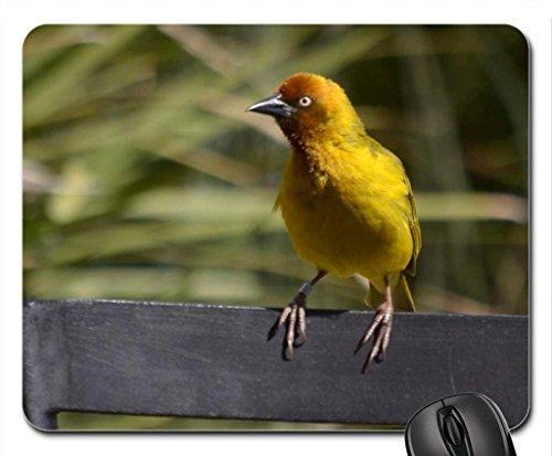Spring weaver Mouse Pad, Mousepad (Birds Mouse Pad) (Bird Weaver)