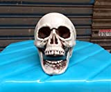 Zhang New Halloween Props Small Plastic Skull Halloween Supplies Halloween Haunted House Props Arranged 17 (Color : White)
