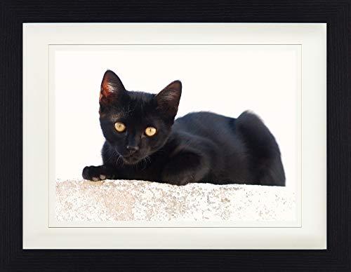 1art1 113863 Katzen - Schwarzes Kätzchen Gerahmtes Poster Für Fans Und Sammler 40 x 30 cm