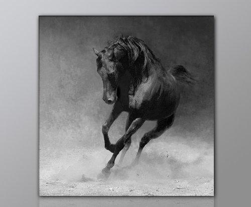 WILD Leinwandbild Bilder Pferd Pferdebild (horse-50x50cm) Hengst Pferde auf Leinwand gerahmt - Bilder fertig gerahmt mit Keilrahmen riesig. Ausführung Kunstdruck auf Leinwand. Günstig inkl Rahmen