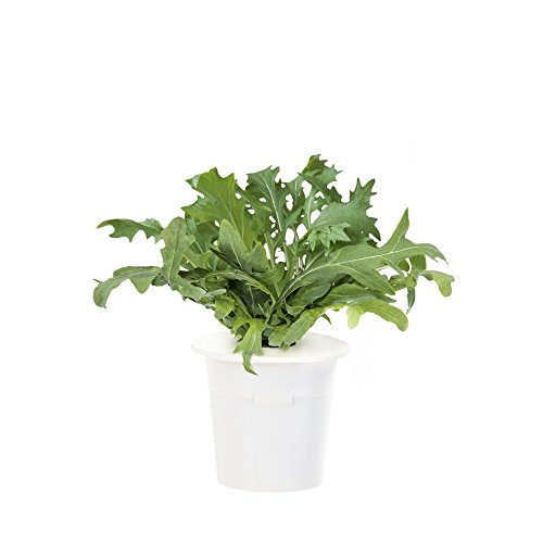 Click & Grow Leaf Mustard Refill 3-Pack for Smart Herb Garden