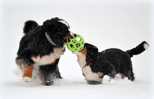 jw Pet Hol-ee Roller Hundespielzeug aus Gummi, Größe 20,3cm, Größe Jumbo -