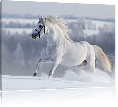 Cavallo bianco sulla neve prato, pittura su tela, Immagini XXL completamente incorniciate con grandi cornici di cuneo, foto muro Stampa artistica con cornice, più economico di pittura o di un dipinto a olio, non un manifesto o un cartello, Leinwand Format:120x80