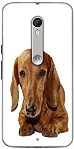 Snoogg Dachshund Staring Portrait Designer Protective Back Case Cover For Motorola Moto X Style