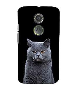 White Cat Design 3D Hard Polycarbonate Designer Back Case Cover for Motorola Moto X2 :: Motorola Moto X (2nd Gen)