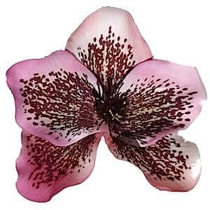 Fleur pour cheveux - Orchidee rose mouchetee