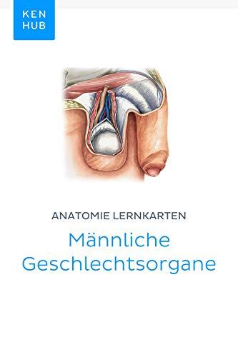 Anatomie Lernkarten: Männliche Geschlechtsorgane: Lerne alle Organe ...