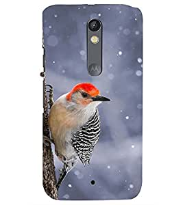 Printvisa Premium Back Cover Black and Red Cuckoobara Bird Design for Motorola Moto X Style::Moto X Pure Edition