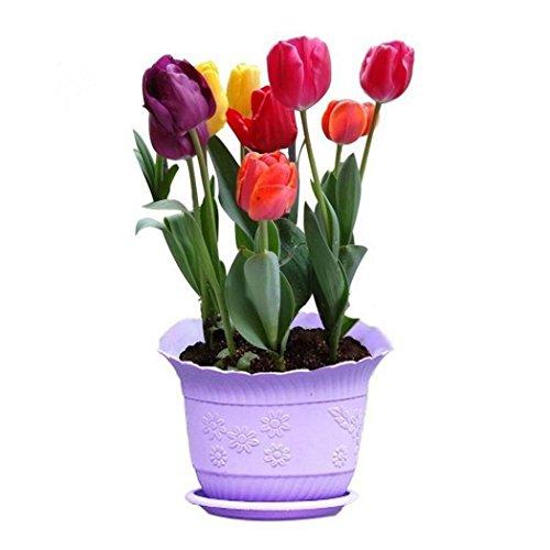Lonlier 100pcs graines fleurs tulipe Arc en ciel couleur Multicolor fleurs Jardin Ampoules de tulipes mélangées Graines