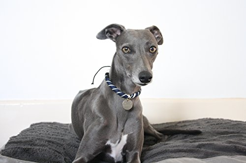 The Trendy Whippet Collar Acolchado casa Interiores