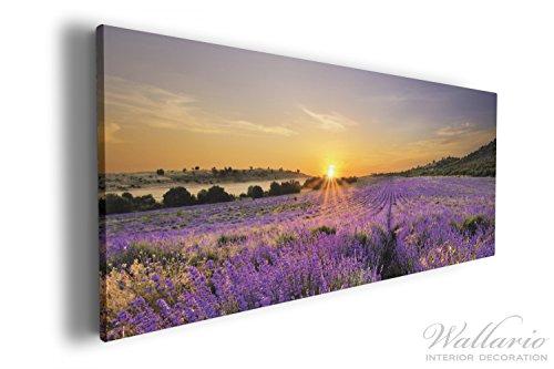 Wallario XXL Wallario Leinwandbild Sonnenuntergang über dem Lavendel - 60 x 150 cm in...