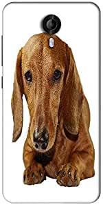 Snoogg Dachshund Staring Portrait Designer Protective Back Case Cover For Micromax Canvas Nitro 3 E455