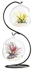 Idea Regalo - Mkouo Air terrario fioriera a forma di vaso globo contenitore vaso decorativo artificiale succulente display vaso portacandela (con supporto in metallo nero) – -1 Globe, clear, m