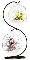 Idea Regalo - Mkouo Air terrario fioriera a forma di vaso globo contenitore vaso decorativo artificiale succulente display vaso portacandela (con supporto in metallo nero)--1Globe, clear, m