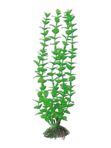 wave-rotala-plante-classique-pour-aquariophilie-taille-l