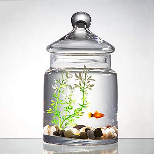 REWQ Aquarium, Glas mit Deckel Wohnzimmer kleines faules Tischaquarium-White Green Set
