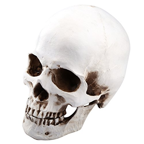 1: 1 Modelo de Cabeza de Tamaño de La Vida Modelo de Cráneo de...
