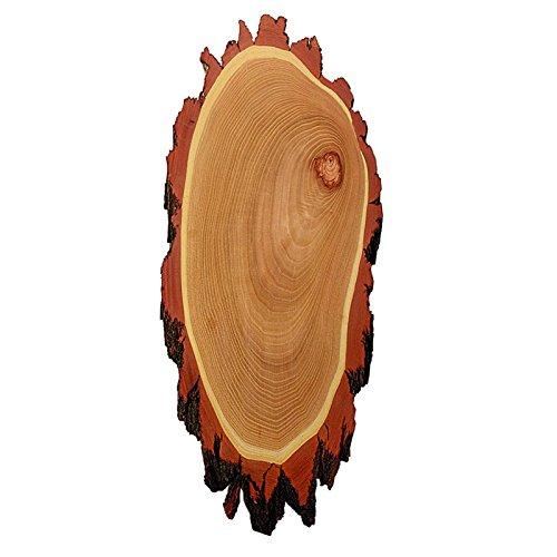 1x Akazie Holzplatte, fr Hirsch Trophe 50x20cm praparat cod. 233201