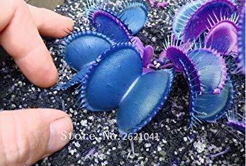 ASTONISH GRAINES D'ASTONIE: 100pcs Carnivores Graines de Anti Moustique Flies s Graines Plantes en pot semences pour jardin Courtyard Plantes Décoration d'intérieur