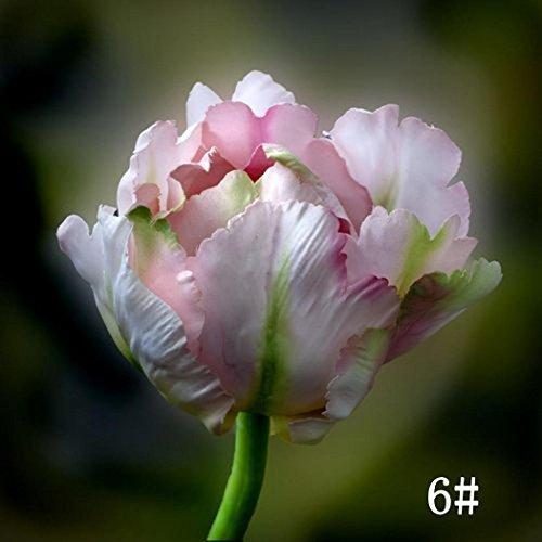 Tulpe Blüte (Qulista Samenhaus - 100pcs Selten Tulpensamen Crispa-Tulpe 'Ballroom' mit mit ihren gefransten Blüten Blumensamen mehrjährig winterhart, geeignet für Garten/Balkon/Topf/Terrasse)