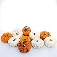 Kürbisplanet Mandarinkürbis-Set (5 weiße u. 5 orangene Mandarinkürbisse) (Jack be Little) - Halloween-Kürbisse - Speisekürbisse