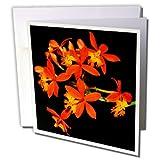 3drose orange Miniatur-Orchideen–Grußkarten, 15,2x 15,2cm, Set 12(GC _ 179652_ 2)