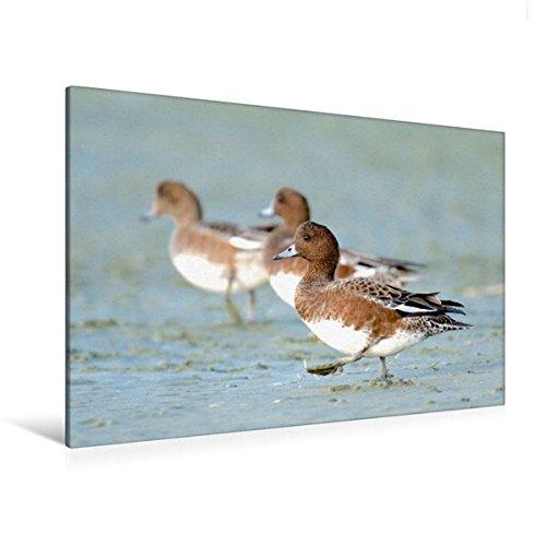 Portada del libro Premium Textil de lienzo 45cm x 30cm pfeifente Horizontal, 120 x 80 cm