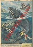 Nei pressi di San Lorenzo (Imperia) alcuni subacquei hanno catturato un balenottero del peso di venti quintali.