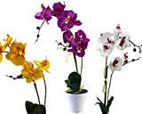 GYD Deko Orchideen Kunstpflanzen Kunst-Blume 2 Rispen mit Topf (weiß, lila, gelb, 40cm)