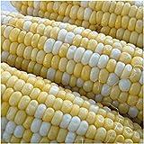 CUSHY Pesche e crema di mais (25 Seeds), tempo preferito per i giardinieri