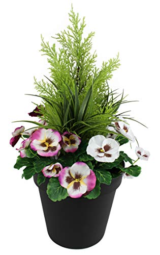 Greenbrokers Limited Fioriera Artificiale (60 cm) con Viole Rosa e Bianche e conifero/Cedro Arte topiaria in Vaso Nero