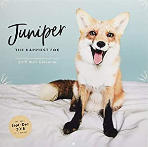 Juniper the Happiest Fox 2019 Wall Calendar
