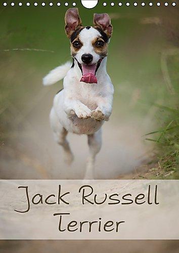 jack-russell-terrier-wandkalender-2017-din-a4-hoch-ein-schoner-kalender-rund-um-den-jack-russell-ter