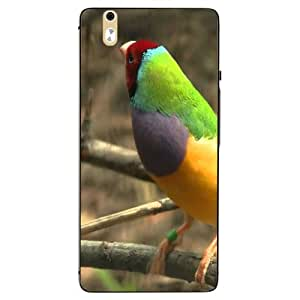 Snazzy Bird Printed Colorful Hard Back Cover For InFocus M810