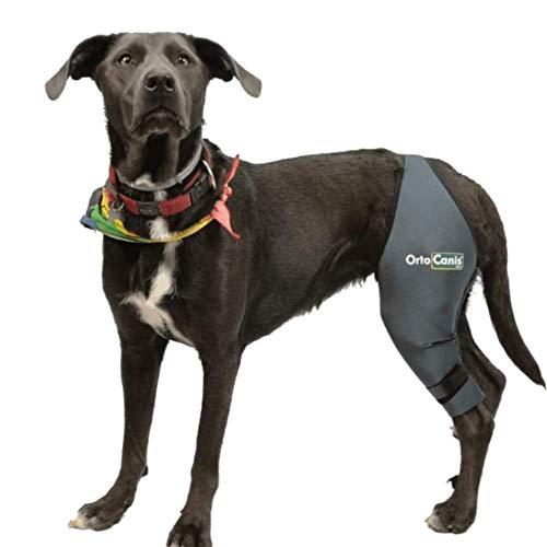 Ortocanis Kniebandage für Hunde - Bein Links - größe L - Oberschenkelumfang 35-40 cm