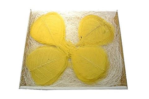 200 Stück Schleierblätter citron (gelb)