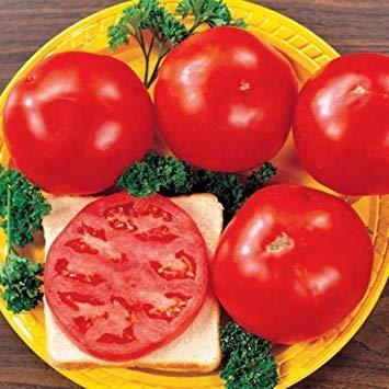 VISA STORE Tomatensamen - Fantastisches Hybrid, 50 (Lycopersicon esculentum) 70 Tage