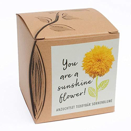 """Geschenk-Anzuchtset""""Sunshine Flower"""" - Teddybär Sonnenblume"""