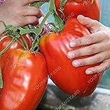 200Seeds 100% auténticos Semillas gigante Sames Graines de tomates frescos en raras Bonsai para...